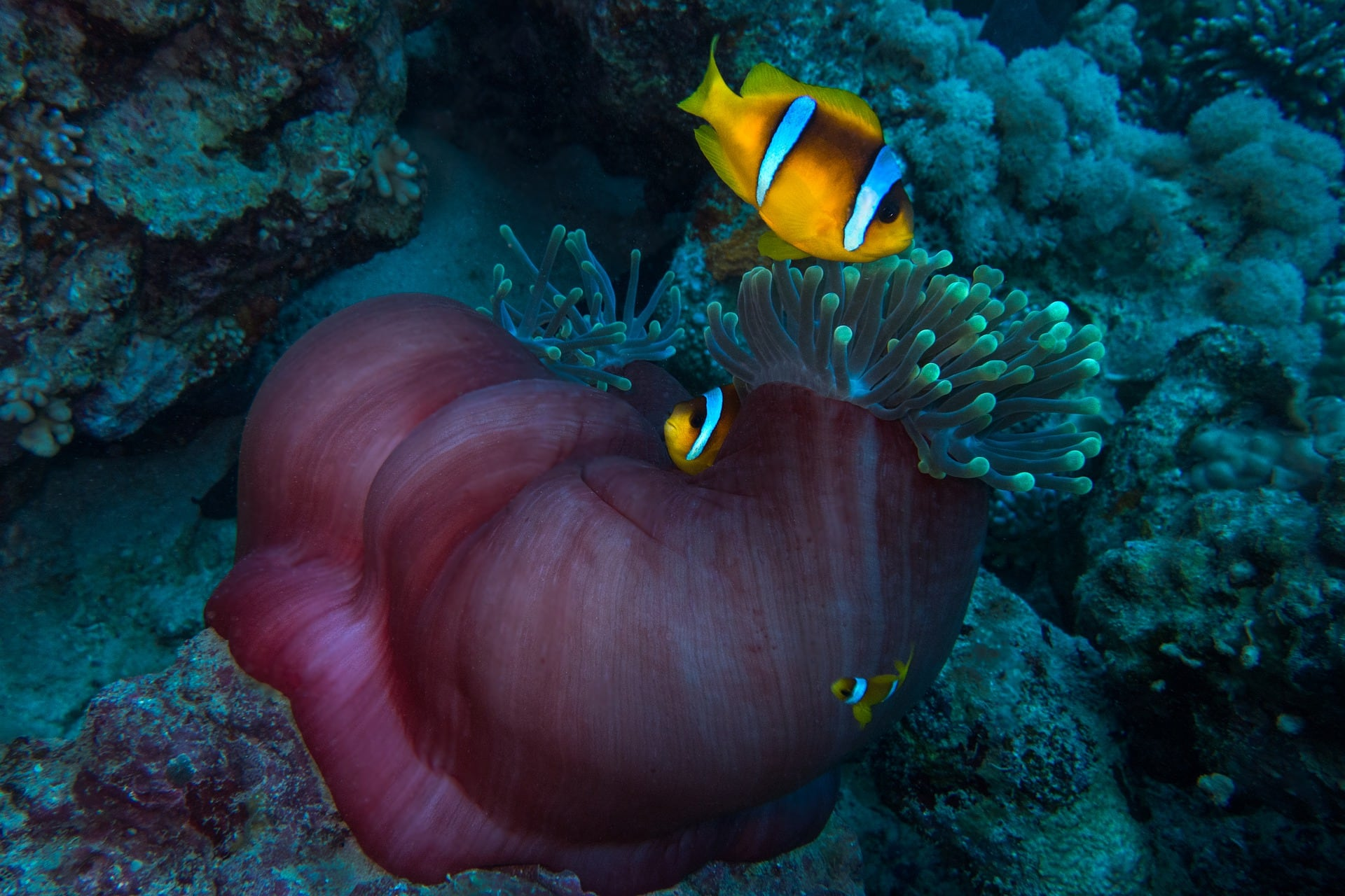 https://www.tropicalmarinecentre.com/sites/default/files/revslider/image/clown-anemonefish-4227162_1920_0.jpg